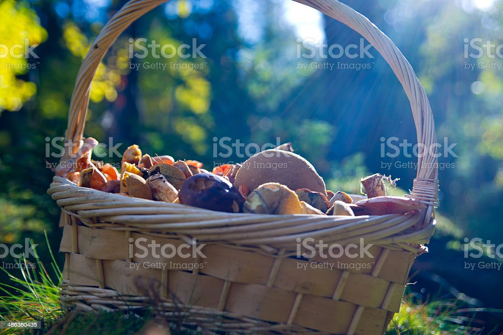 Wicker and mushroom stock photo