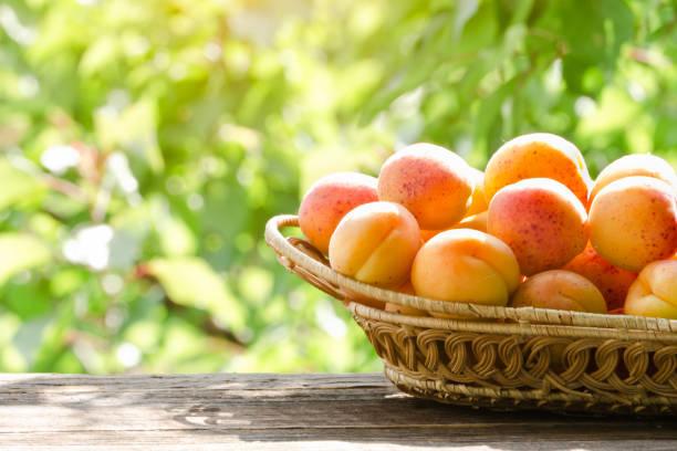 Wicker basket apricot on a green background. Daylight stock photo