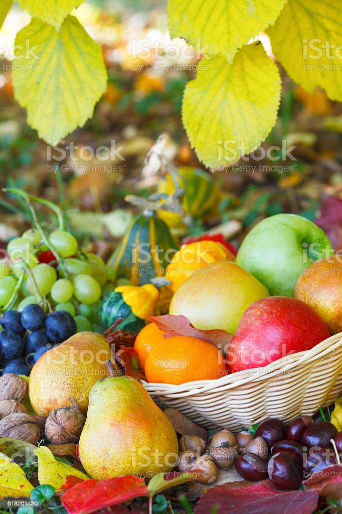 Wicker basket full of autumn fruit stock photo