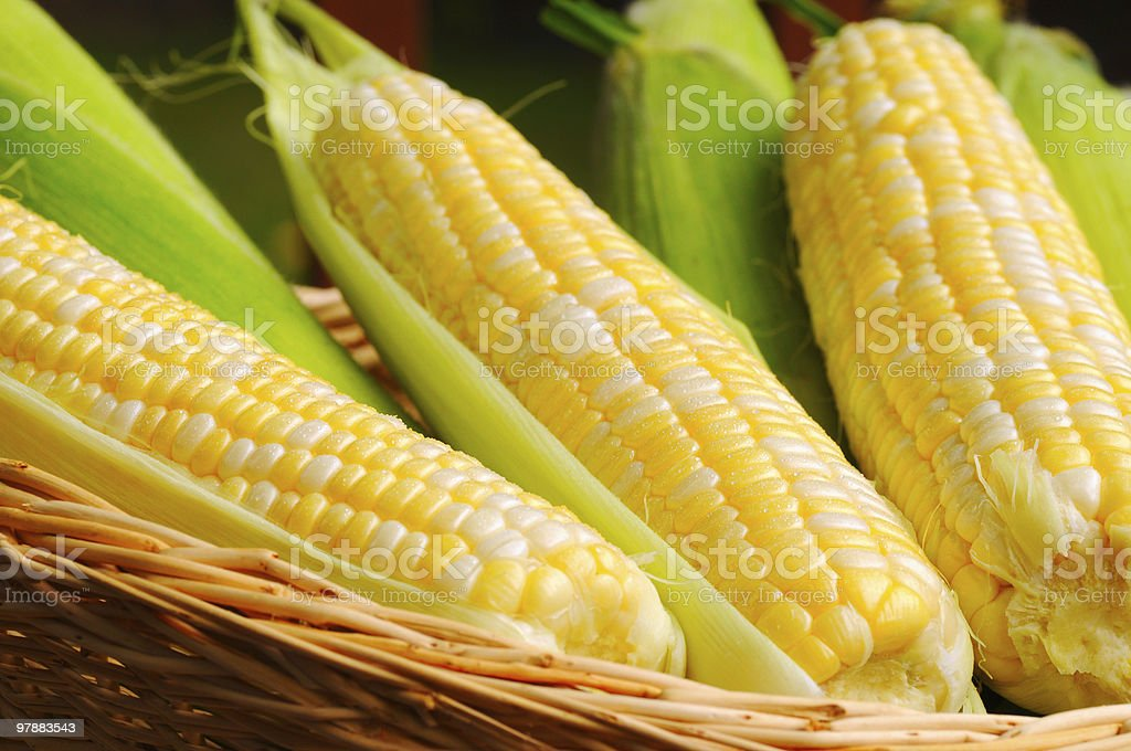 Wicker basket full of sweet corn stock photo