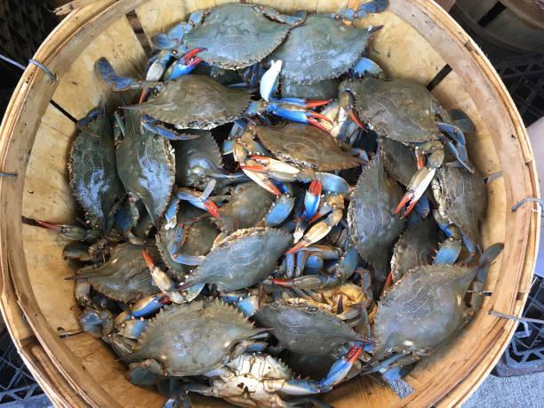 rieten mand met vers blauw krabben. - blauwe zwemkrab stockfoto's en -beelden