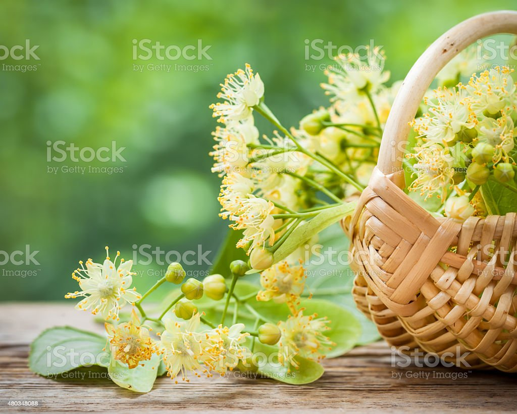 Wicker basket with lime flowers stock photo