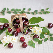 Wicker basket with ripe cherry and scattered berries, leaves, flowers on light background. Concept of healthy food, detox, vitamins, dieting, summer