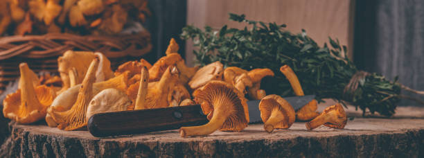 Wicker tray with chanterelle mushrooms on wooden table. Knife, basket with mushrooms and fresh herbs stock photo