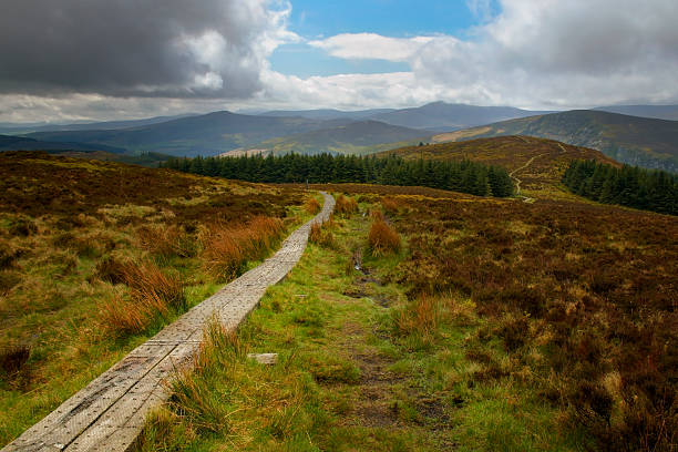 Wicklow way trail leading to the vibrant irish landscape​​​ foto