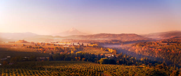 Wide aerial autumn sunrise panorama of the vineyards and orchards in the valleys below Mt Hood looking south towards the mountain stock photo