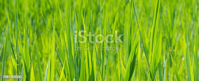 istock wide angle banner in grassland with copy space 1091755030