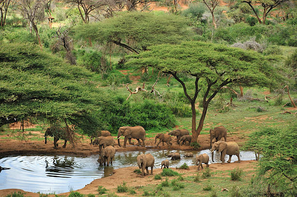 Wide angle photograph of some grey elephants at a waterhole stock photo