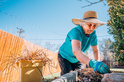 Wide Angle Shot of a Happy Senior Caucasian Woman Reaching and Cleaning Up Old Foliage in Her Backyard Garden