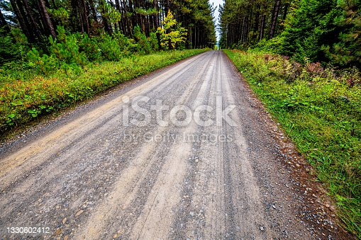 istock Wide angle view closeup looking down on road through spruce pine tree forest lining dirt path in Dolly Sods, West Virginia autumn fall season 1330602412