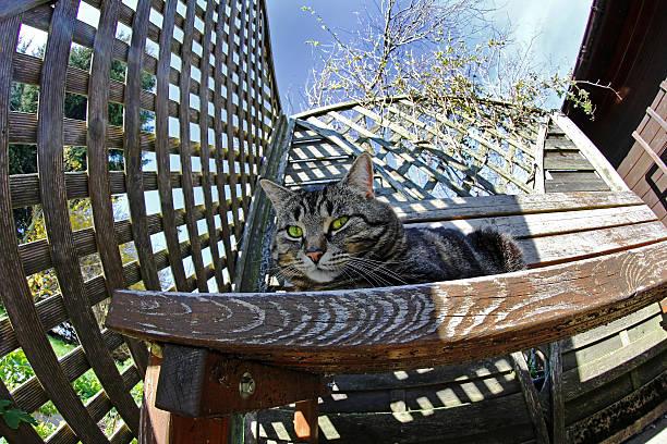 Stupendous Wide Angle View Of A Cat On A Wooden Bench Stock Photo Inzonedesignstudio Interior Chair Design Inzonedesignstudiocom