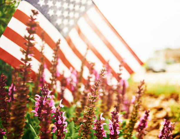 Wide angle view of salvia plants growing in flowerbed with American flag Wide angle view of salvia plants growing in flowerbed with American flag independence day photos stock pictures, royalty-free photos & images