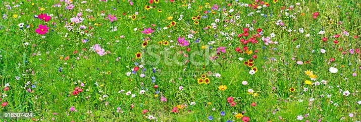 istock Wide background of variety of wildflowers. 916307424