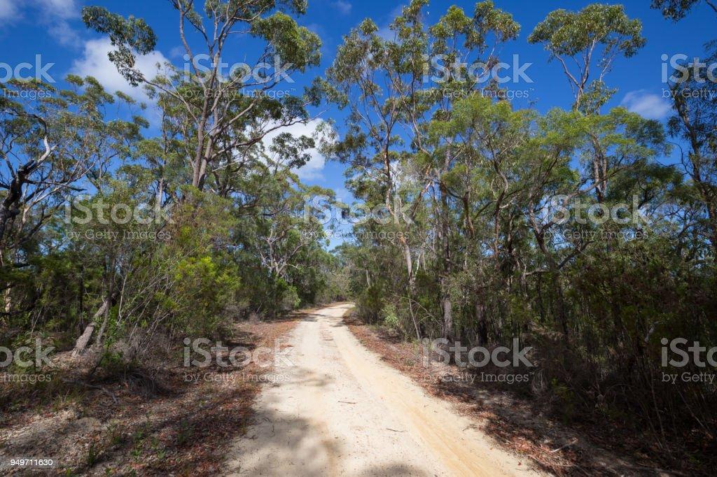 A wide bush walking fire trail travels through a native australian forest stock photo