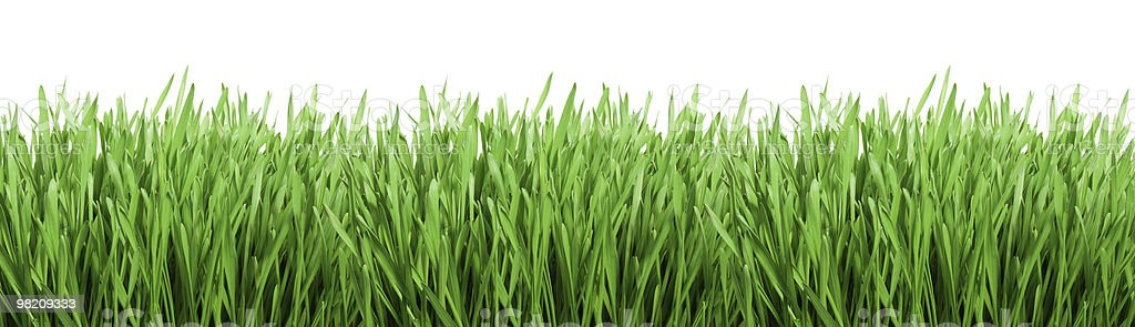 A wide expanse of light green grass royalty-free stock photo