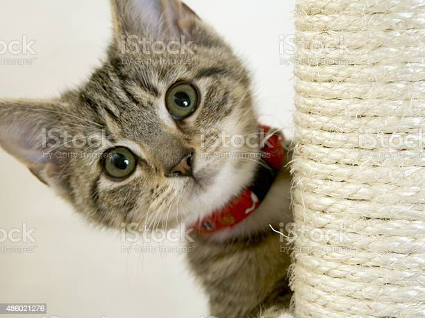 Wide eyed kitten on a scratching post looking at camera picture id486021276?b=1&k=6&m=486021276&s=612x612&h=x6rzl3mdbmmkwgztro8plwmulaijaenb zik6rs8280=