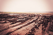 wide field