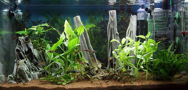 wide fishtank shot - home aquarium stock pictures, royalty-free photos & images
