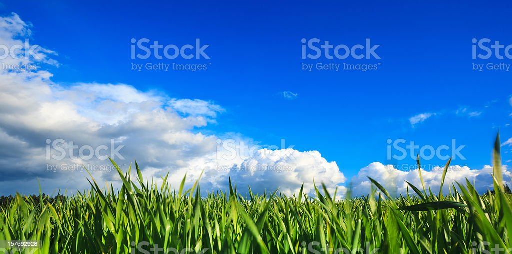 Wide Green Field royalty-free stock photo