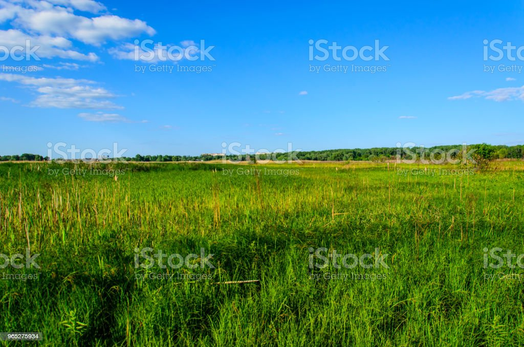 Wide green meadow royalty-free stock photo