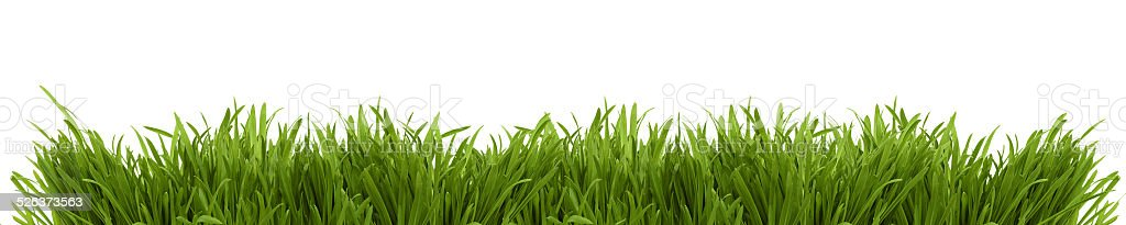 Wide image of a fresh green spring grass stock photo