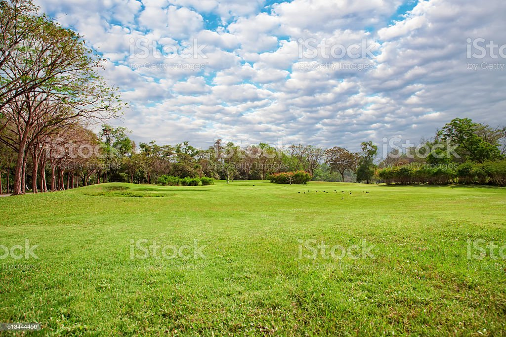 wide lawn in the park with beautiful sky stock photo