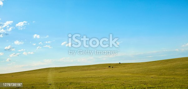 Wide open landscape and cows under cloudy blue sky in Colorado, USA