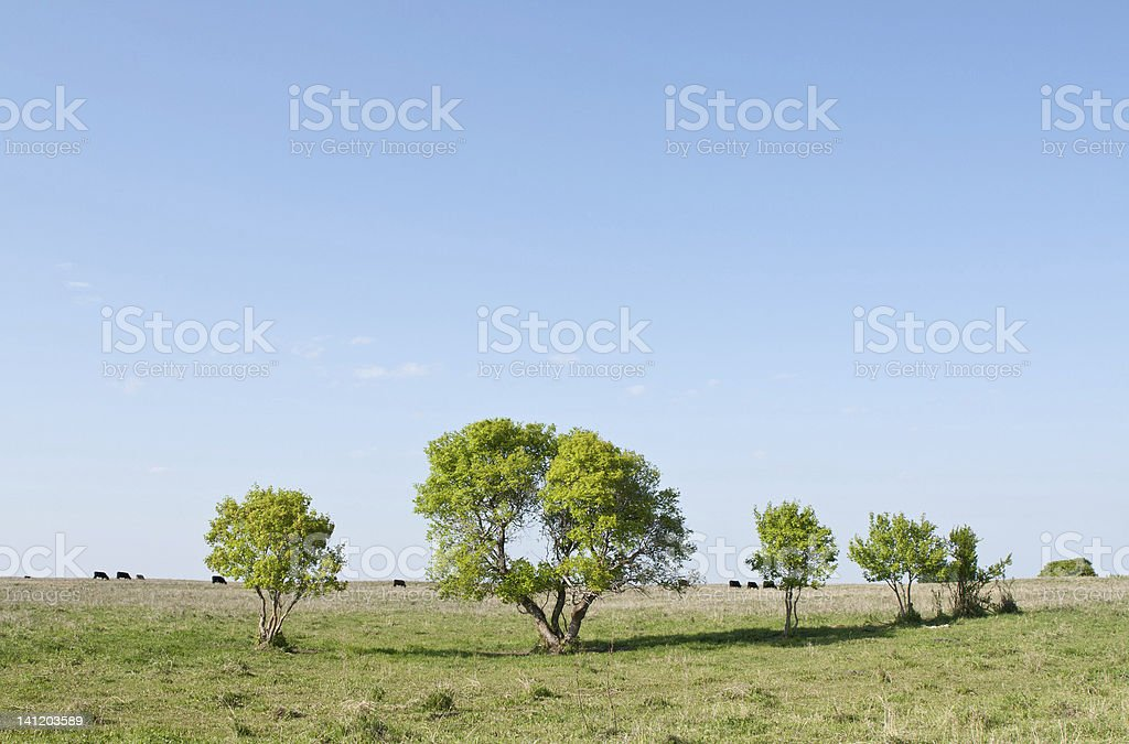 Wide open prairie, big blue sky stock photo