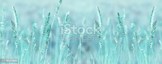 Wide panoramic natural background in pastel colors. Wild grass field panorama. Nature outdoors widescreen wallpapers