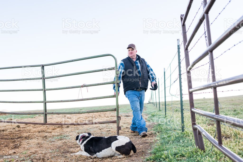 Wide rancher walking into animal pen ready to work waiting for him