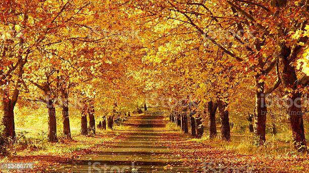 Wide Shot Of A Pathway In The Fall Stock Photo - Download Image Now