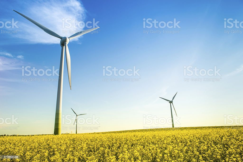 Wide shot of windmills in a field with a clear blue sky royalty-free stock photo
