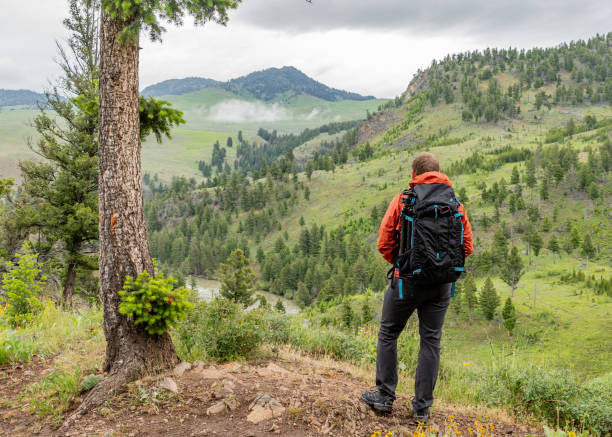 Wide View of Man looking out over Yellowstone stock photo