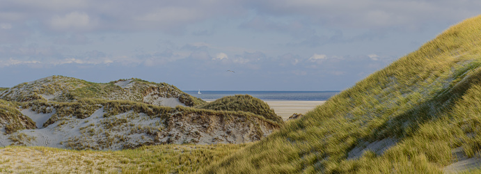 Wide view of overgrown dunes sailboat on the horizon.