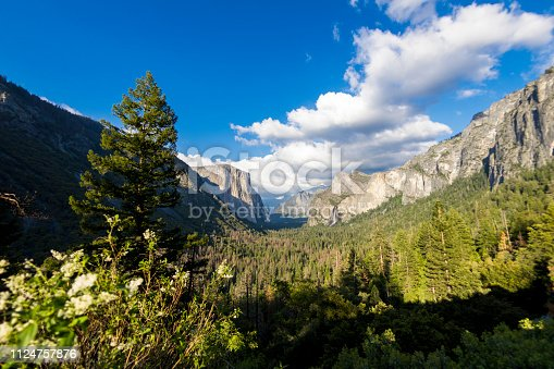 Wide view of Yosemite Valley with Bridalveil Falls and green pine forest from Tunel view