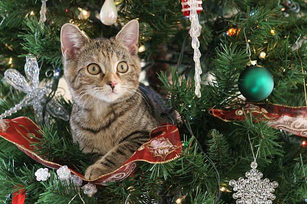 Wideeyed kitten sitting in decorated christmas tree picture id139863468?b=1&k=6&m=139863468&s=612x612&w=0&h=kle c9bhjyrdi9iqg3qwhbp8woz7p7b0k1voq2mvj8o=