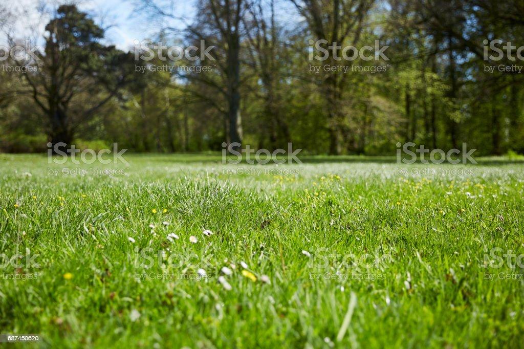 Wiese mit Bäumen im Hintergrund stock photo