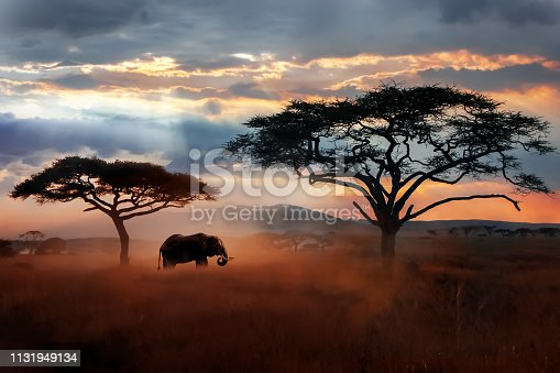 Wild African elephant in the savannah. Serengeti National Park. Wildlife of Tanzania. African landscape.