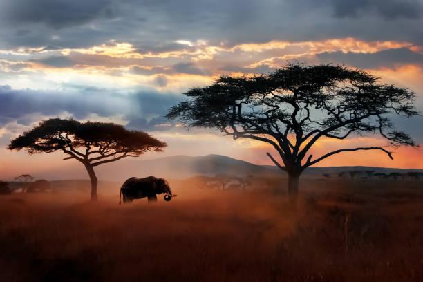 elefante africano selvatico nella savana. parco nazionale del serengeti. fauna selvatica della tanzania. paesaggio africano. - fauna selvatica foto e immagini stock