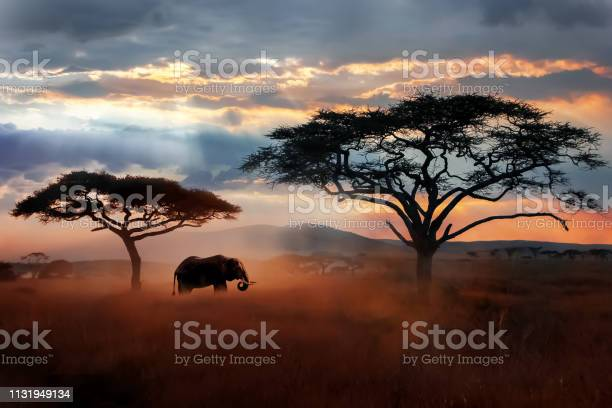Photo of Wild African elephant in the savannah. Serengeti National Park. Wildlife of Tanzania. African landscape.