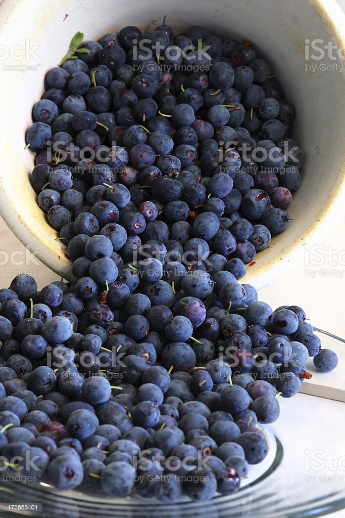 wild alaskan blueberries royalty-free stock photo