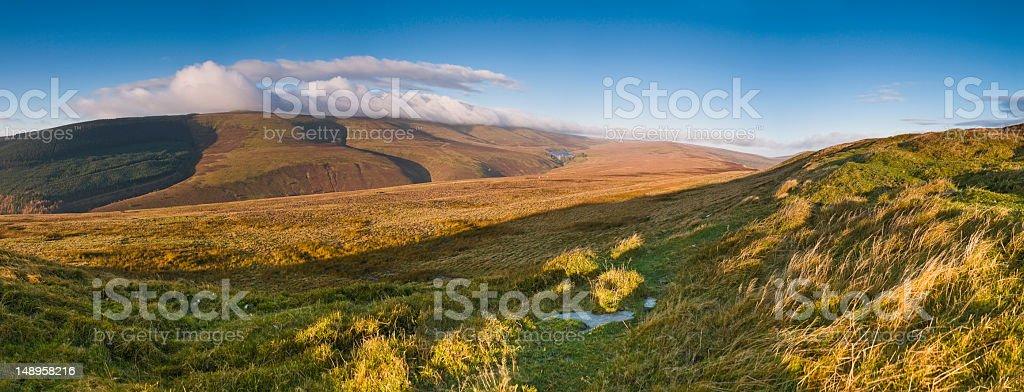 Wild and windswept golden grasslands stock photo