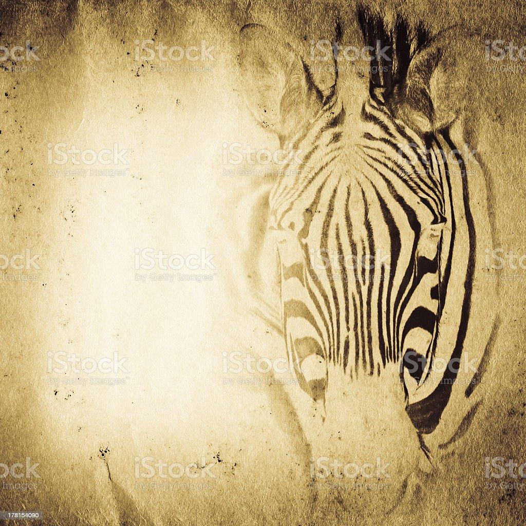wild aniaml zebra old grunge paper texture stock photo