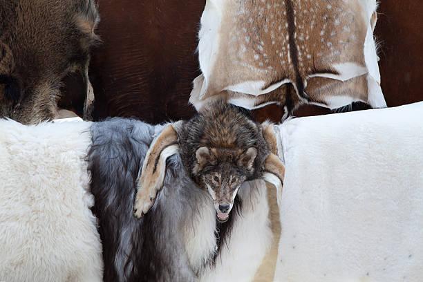 Wild animal fur skins, wolf head selling at craft market stock photo