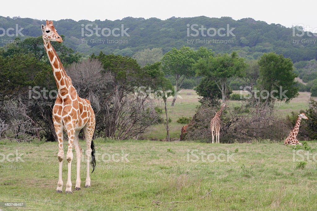 wild animal park royalty-free stock photo