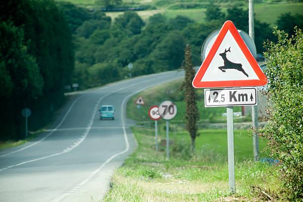 Wild animal road warning sign. stock photo