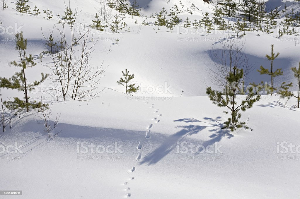 wild animal traces royalty-free stock photo
