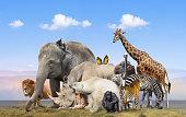 istock Wild animals group on blue sky background 1263462458