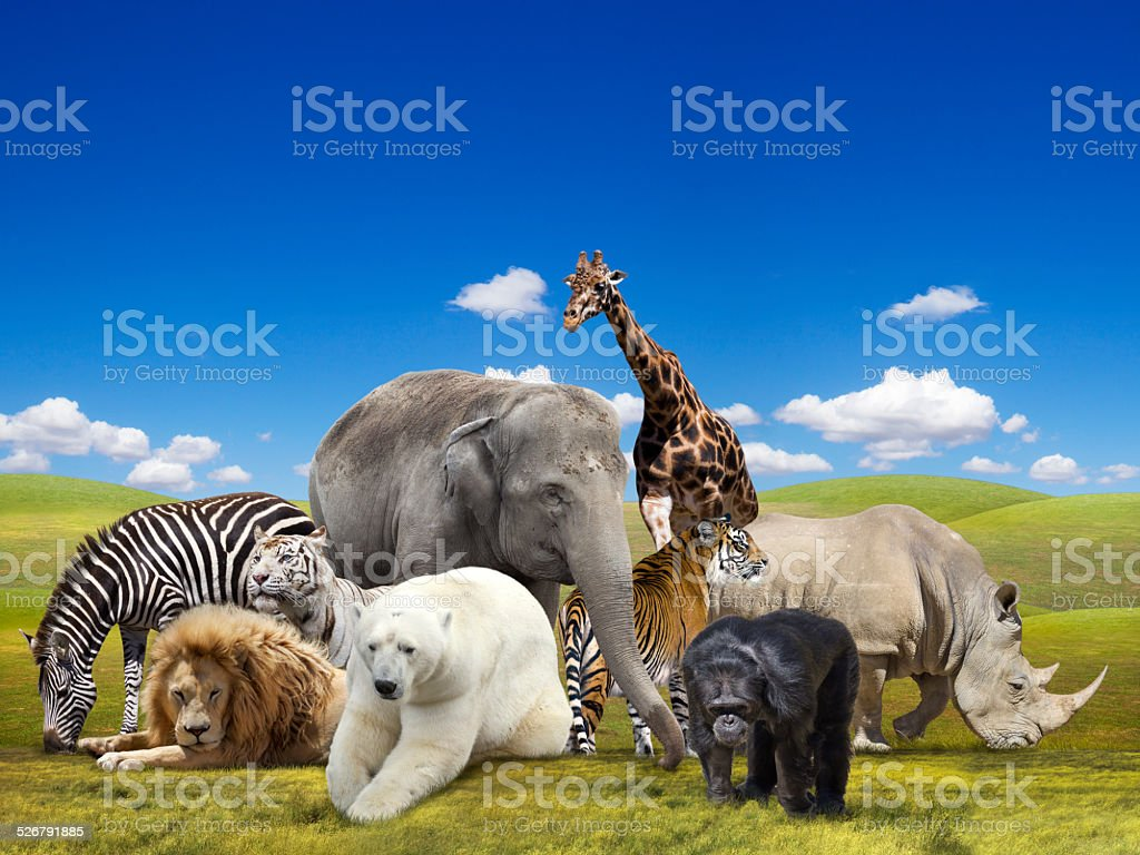 Wild  animals group stock photo