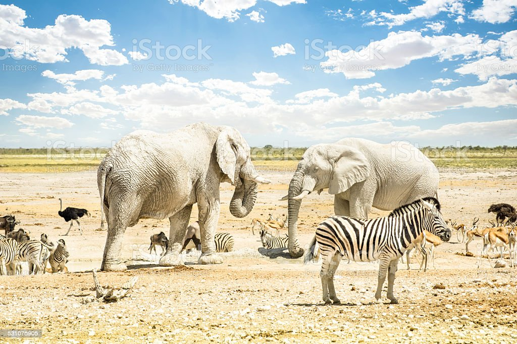 Wild animals on a water pool spot at Etosha Park stock photo